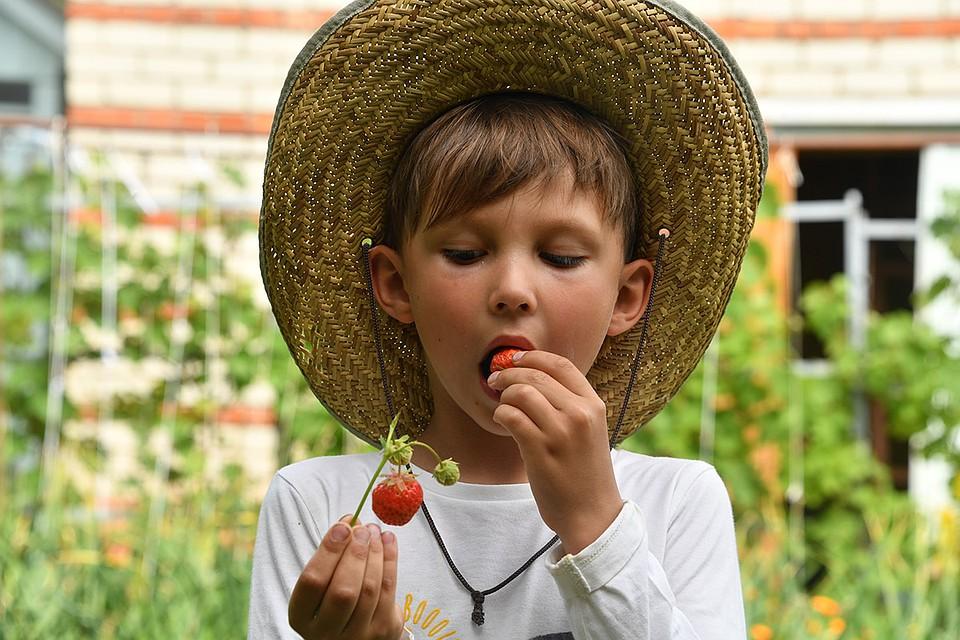 За городом нас подстерегают самые разные напасти: то ребенок наестся немытых ягод прямо с грядки и мучается животом. То пчела (или оса – поди разбери!) цапнет.