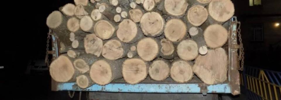 На Кубани лесничий пойдет под суд за злоупотребление полномочиями. Фото ГУ МВД по краю