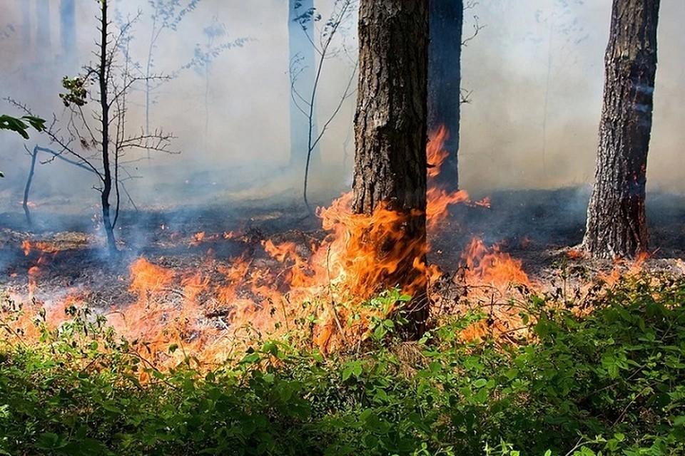 «В два раза больше площади Сан-Марино»: в Югре бушуют небывалые лесные пожары. Фото: ГУ МЧС по ХМАО-Югре