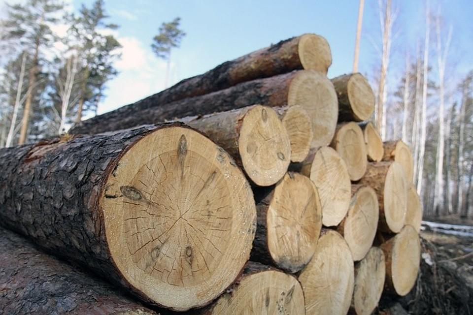 Темпы потери лесов существенно снизились за период 1990 - 2020 годов из-за сокращения вырубки лесов в некоторых странах.