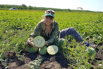 У этого арбуза множество вкусов: астраханские селекционеры вырастили первый в России белый полосатик