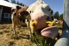 Областной молочный союз поможет