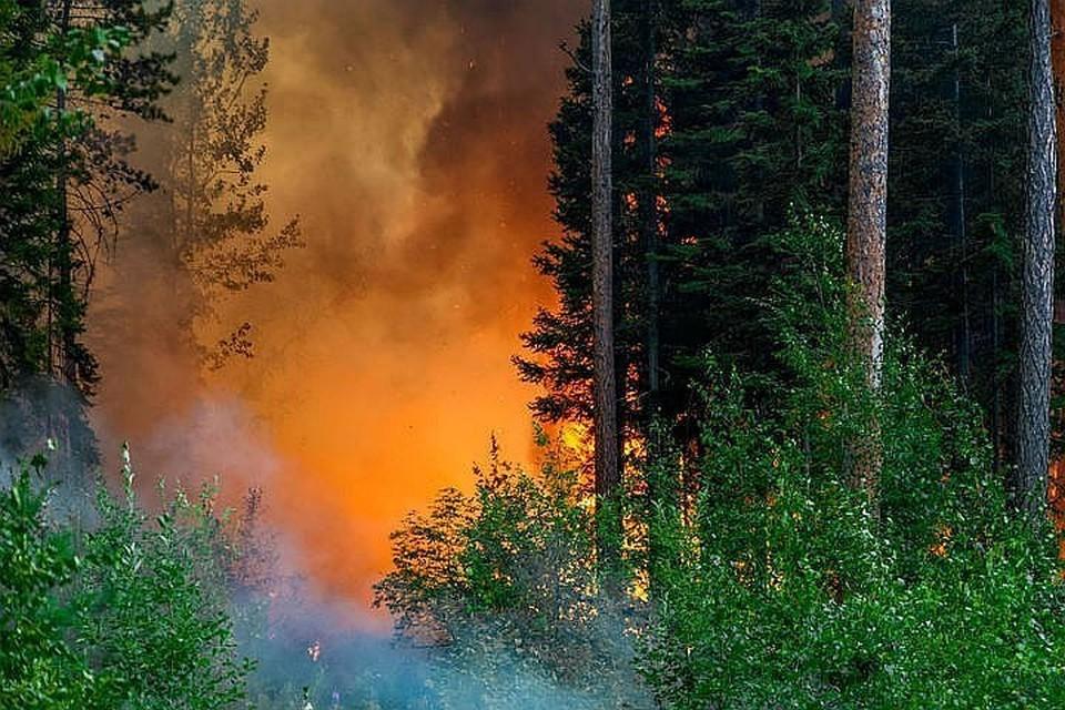 Основные причины возгораний в регионе - грозовые разряды и нарушение гражданами правил пожарной безопасности в зеленых массивах.