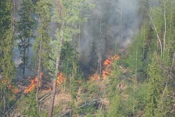 Жителей Якутска просят не выходить на улицу из-за дыма от лесных пожаров