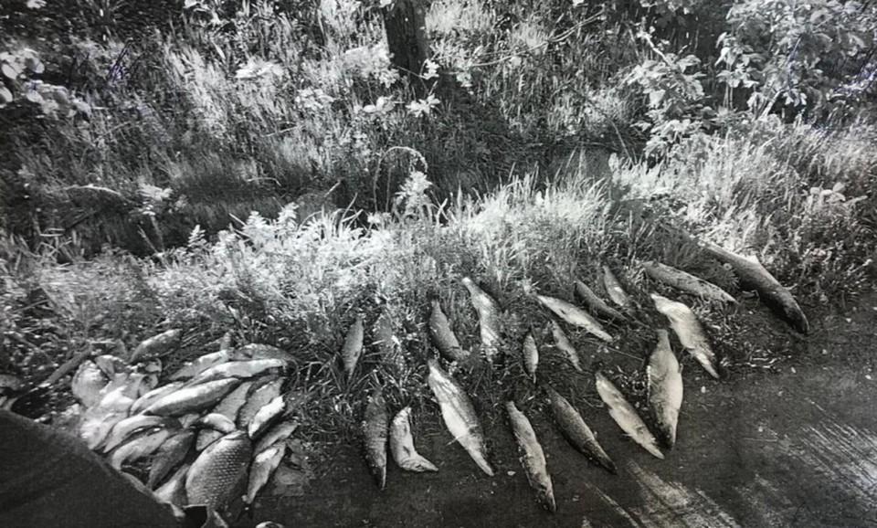 Браконьеры из Азии набили электроудочкой под Рязанью 75 экземпляров рыбы.