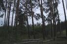 «Место расправы из 90-х»: в Северном лесу Воронежа выстрелили в мужчину