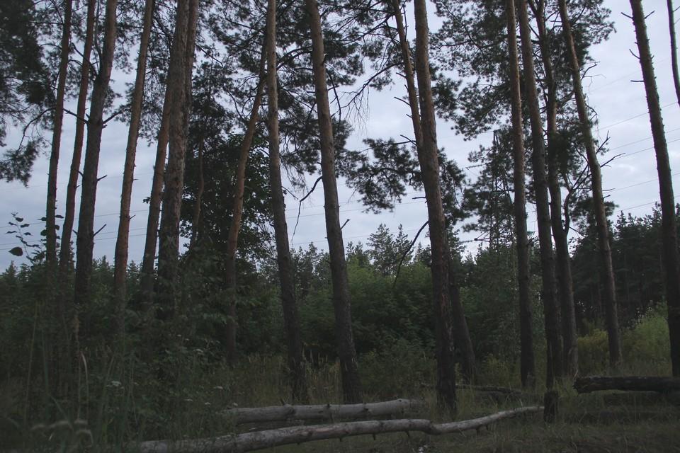 Похоже, Северный лес становится все более опасным местом