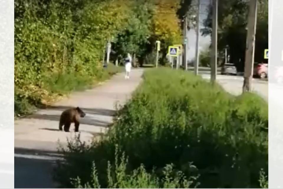 Screenshot видео сайта Мой город Пермь