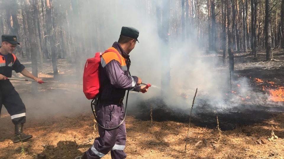 В Ростовской области третьи сутки полыхает лесной пожар. Фото: ГУ МЧС России по РО.