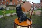 Блокадники ответили ученым, которые назвали историю про вагон кошек, привезенных в Ленинград для борьбы с крысами, «красивой легендой»