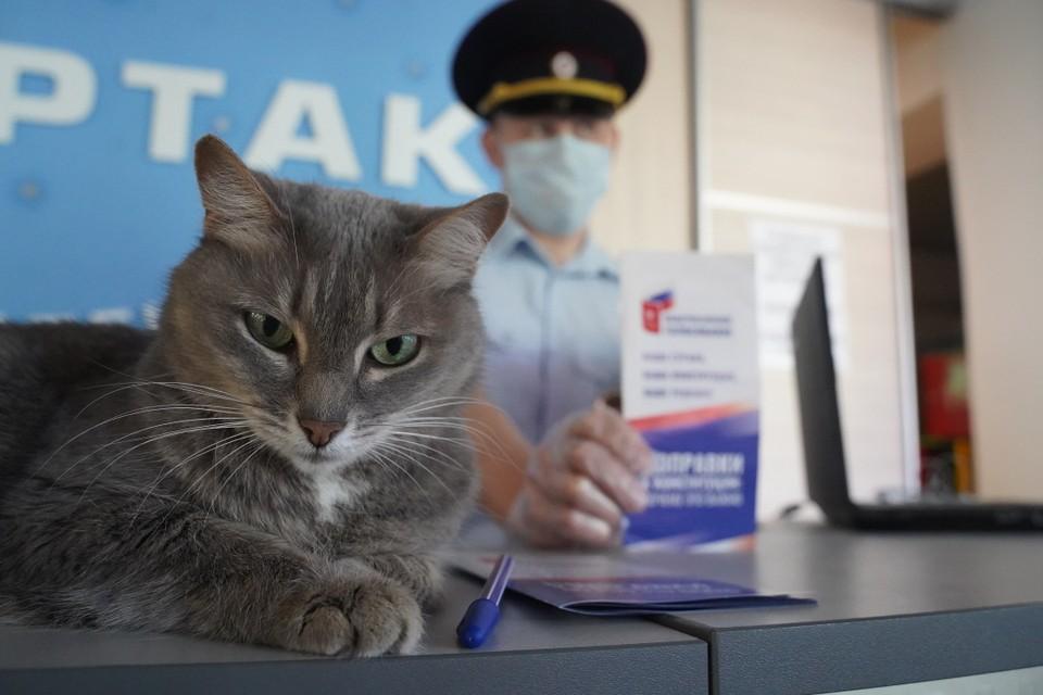 13 сентября 2020 ставропольских избирателей ждут более чем на 550 участках для голосования
