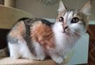 «Буквально тает в руках»: Кошечка Карамелька ищет дом в Петербурге