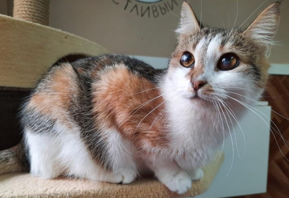 Мурлыка попала в приют в декабре прошлого года. Фото предоставлено мини-приютом «Счастливый кот».