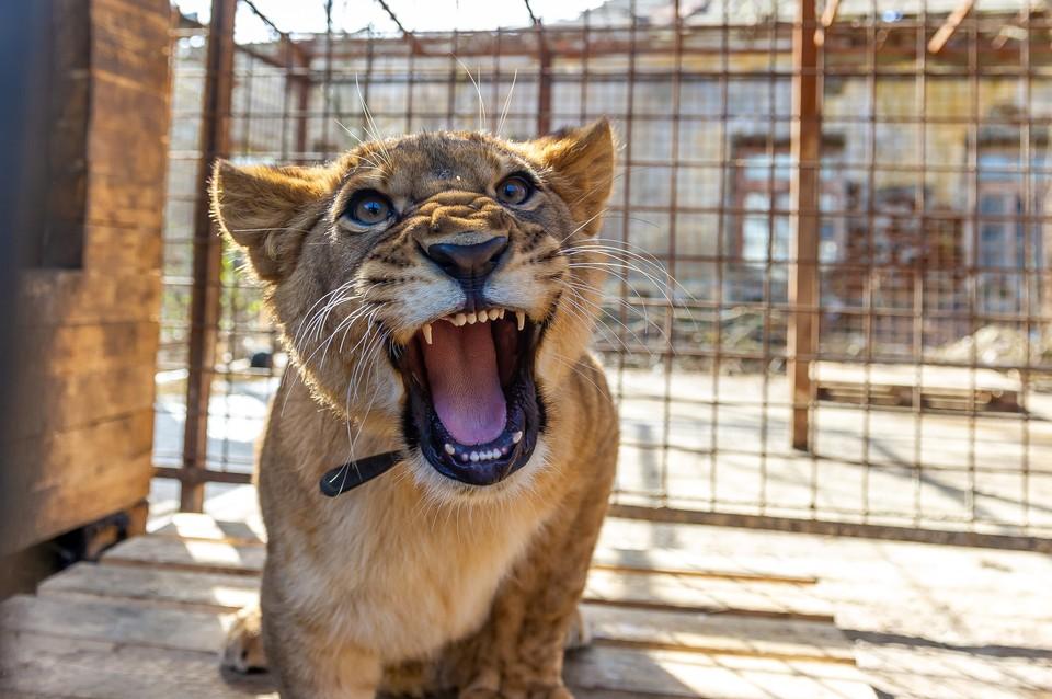 В Ленинградском зоопарке сгорел вольер для животных