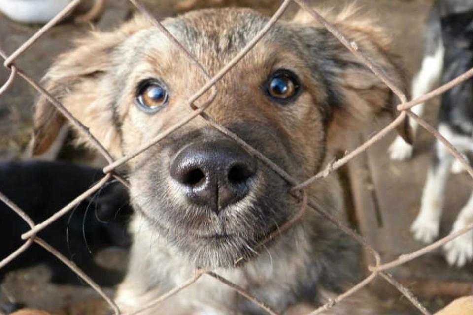 Омичам пообещали сохранить одну из немногих в городе площадок для выгула собак.