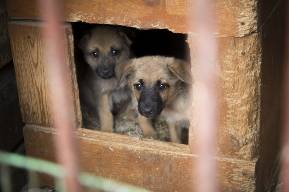 Собак в Волгограде много, а вот девать их некуда.
