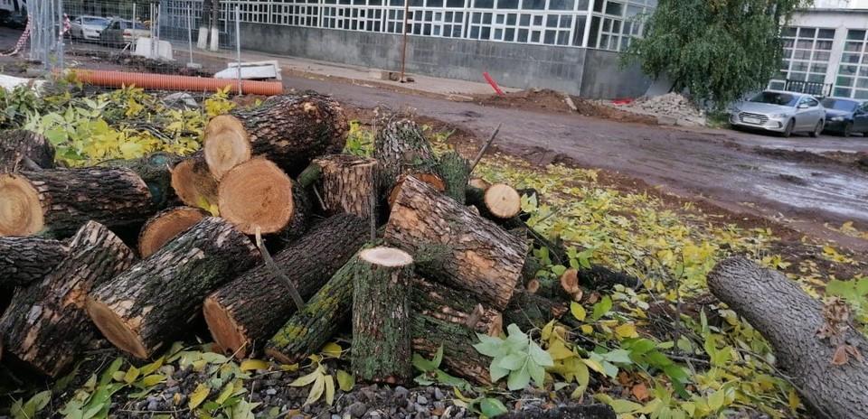 На месте деревьев остались лишь пеньки.
