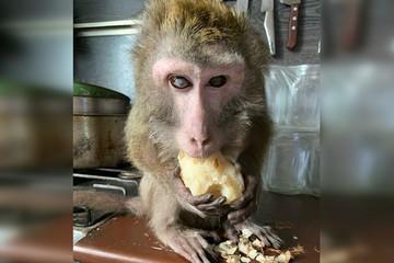 «Он превратился в облысевший скелетик»: самарские волонтеры спасают обезьяну, которая теряет зрение