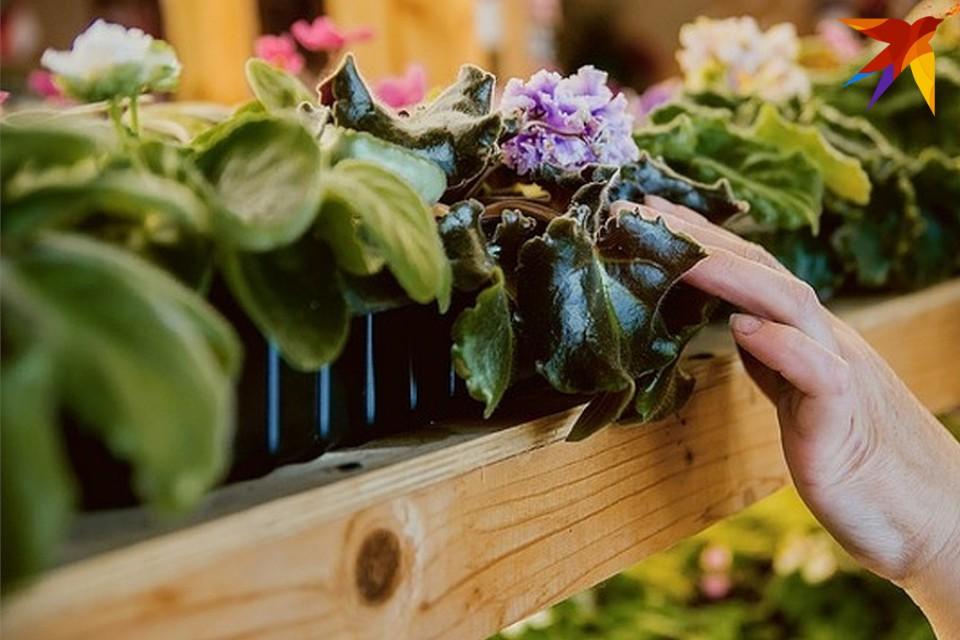 На выставку приглашают цветоводов и всех любителей комнатных цветов.