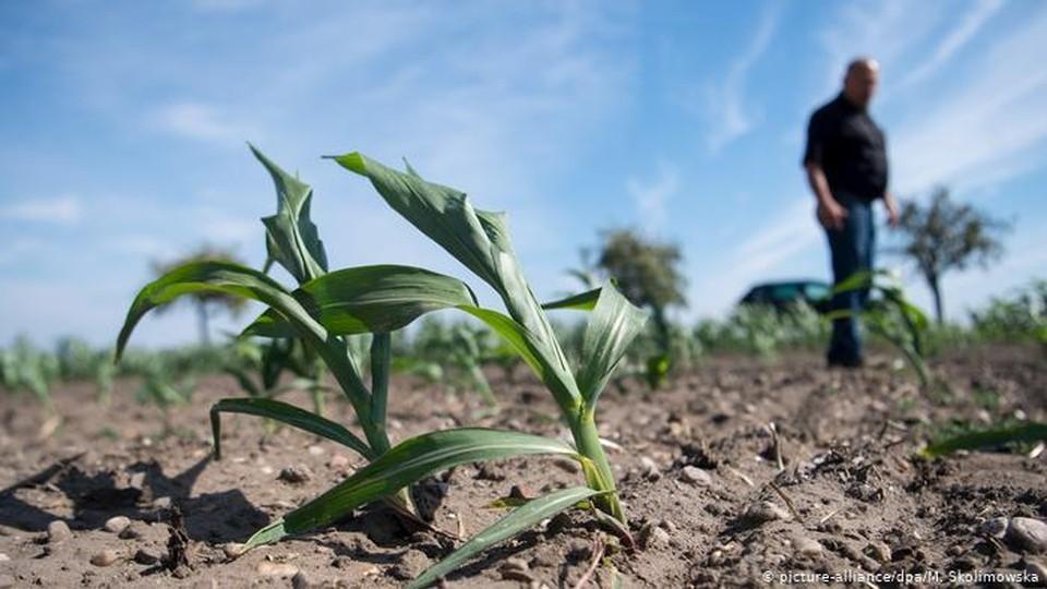 Молдавские аграрии, урожай первой группы которых погиб из-за засухи, получили 300 млн. леев
