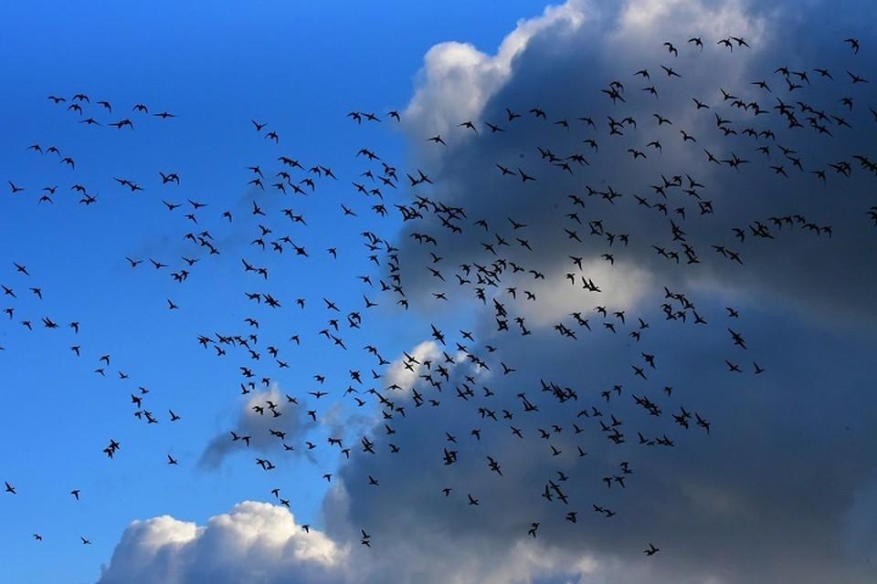 Самолет при посадке в аэропорту Нижневартовска столкнулся со стаей птиц