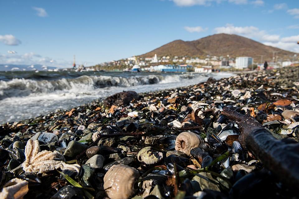 Именно токсины погубили морских животных