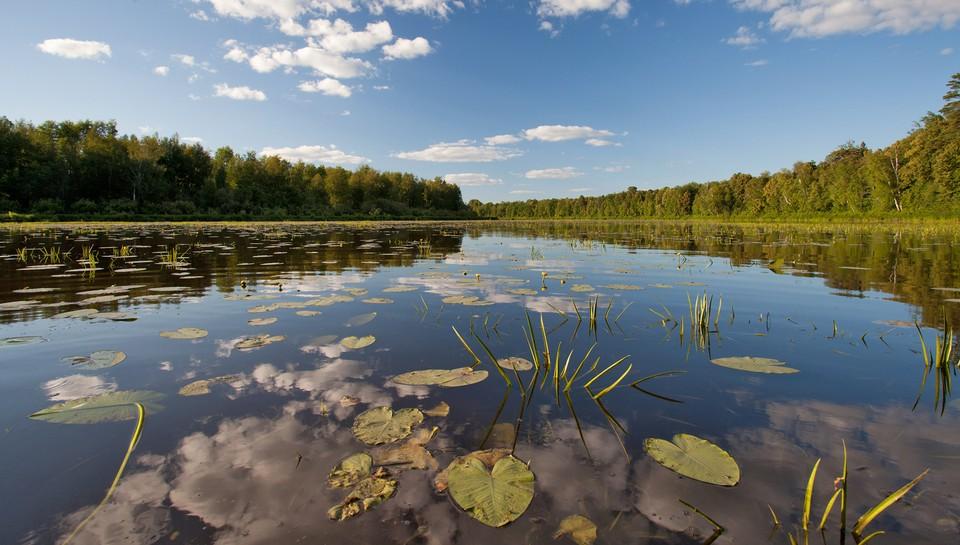 Заповедник состоит из участков «Нургуш» и «Тулашор», расположенных в Котельничском и Нагорском районах. Фото: Александр ШИРОКИХ
