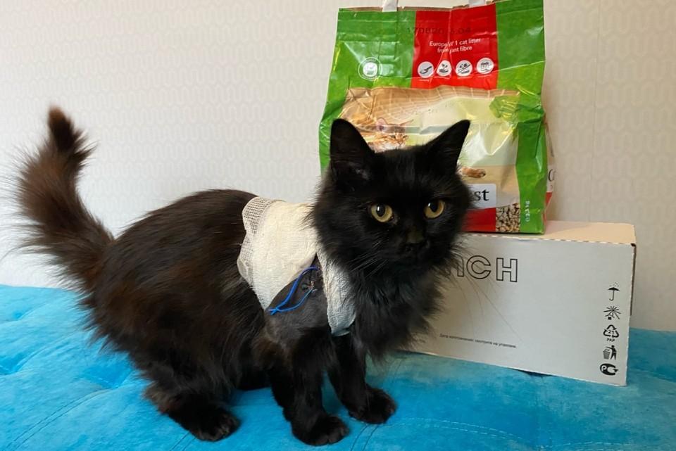 В новый дом Линд пришла не с пустыми лапами, а с подарком - кошачьим наполнителем. Фото: Ольга Березина.