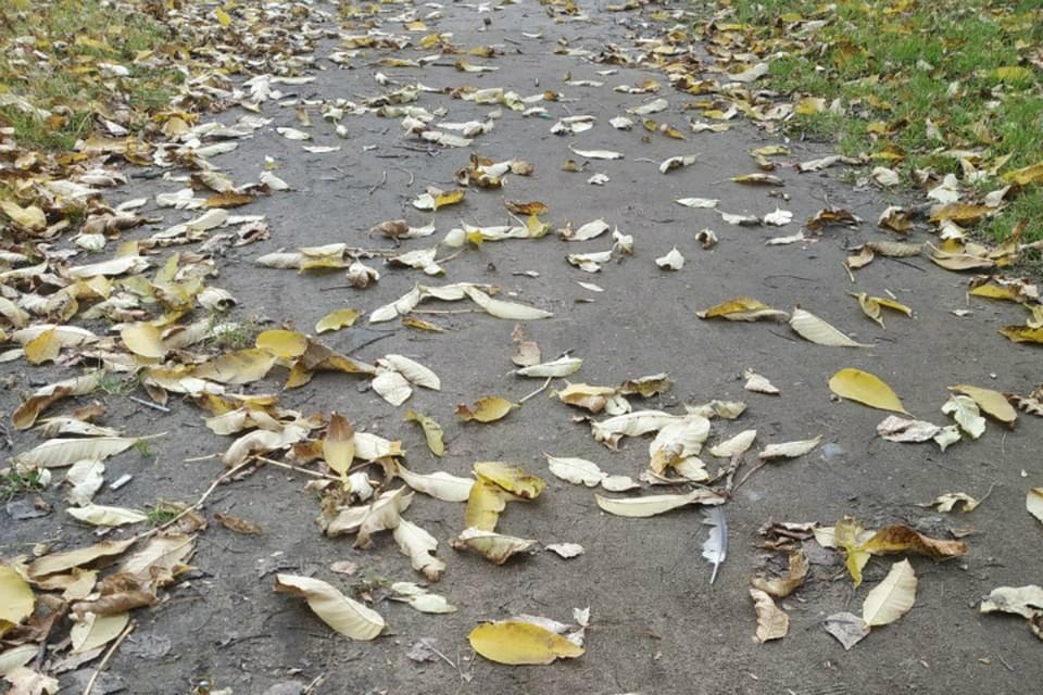 Обстановка в Хабаровском крае 21 октября 2020: погода, заболеваемость, радиационный фон