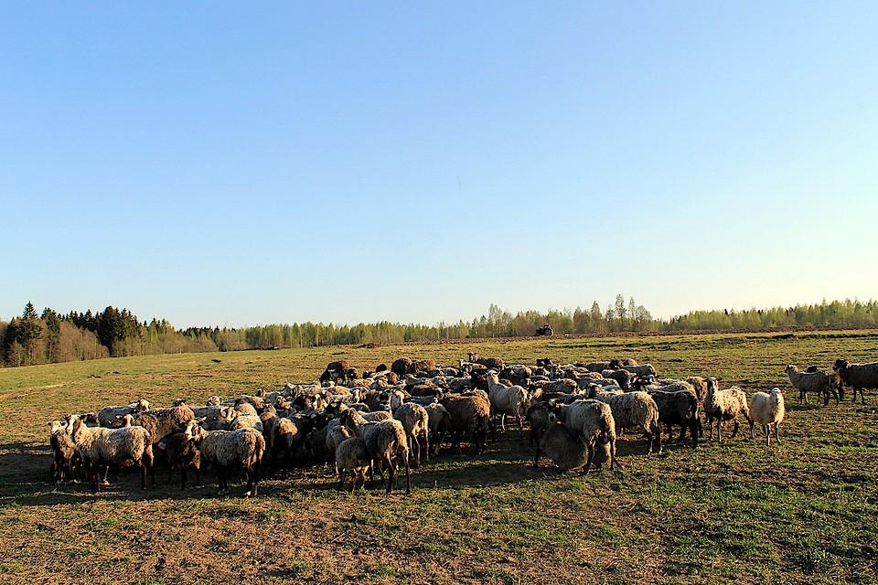Конкурс на лучшее семейное подворье в Тверской области проводится впервые. Фото: vk.com/tverreg_family