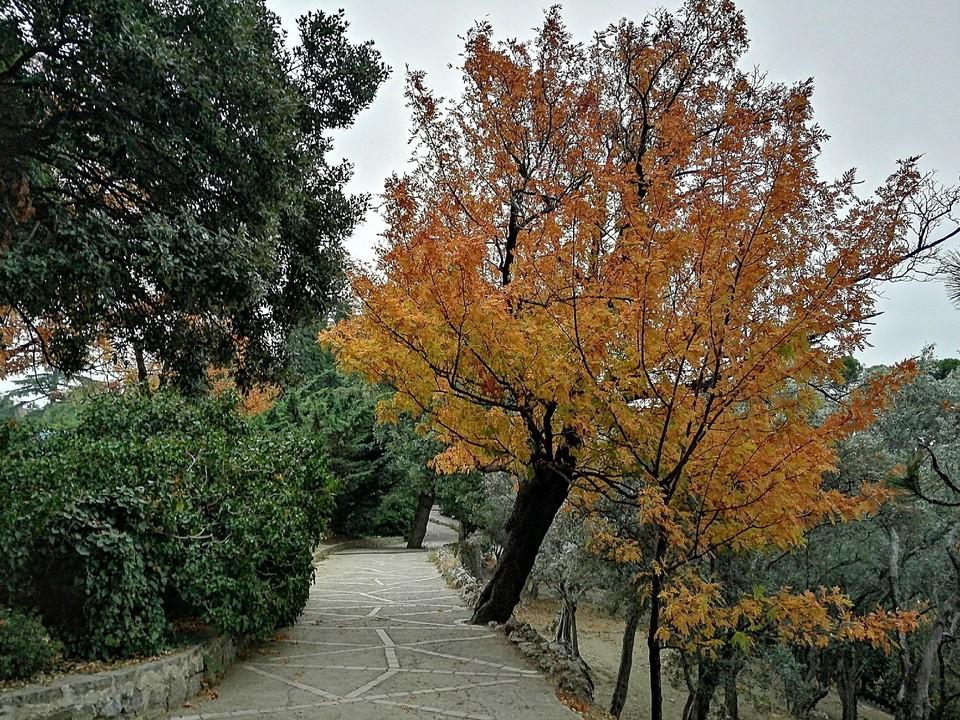 В Никитском ботаническом саду хозяйничает осень.