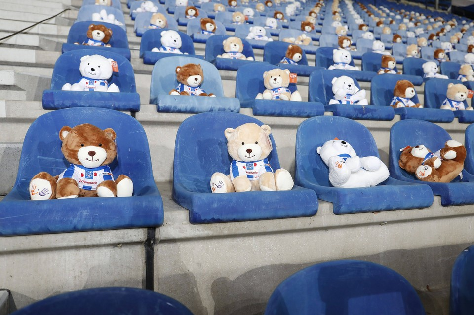 Медведи заняли места зрителей.
