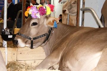 Лучшее мясо и молоко: челябинские аграрии завоевали золотые медали на агропромышленной выставке «Золотая осень» за успехи в животноводстве