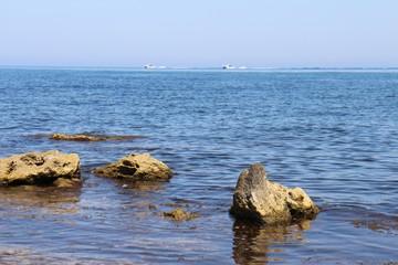 В Черном море из-за потепления завелась рыба-хирург и другие новоселы