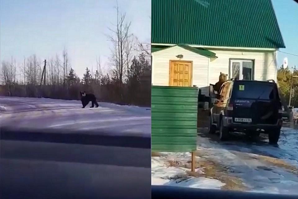Медведь попытался вломиться в дом к югорчанам. Фото: скриншот