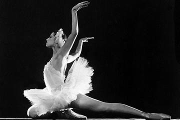 Как Майя Плисецкая училась танцевать у лебедей в зоопарке