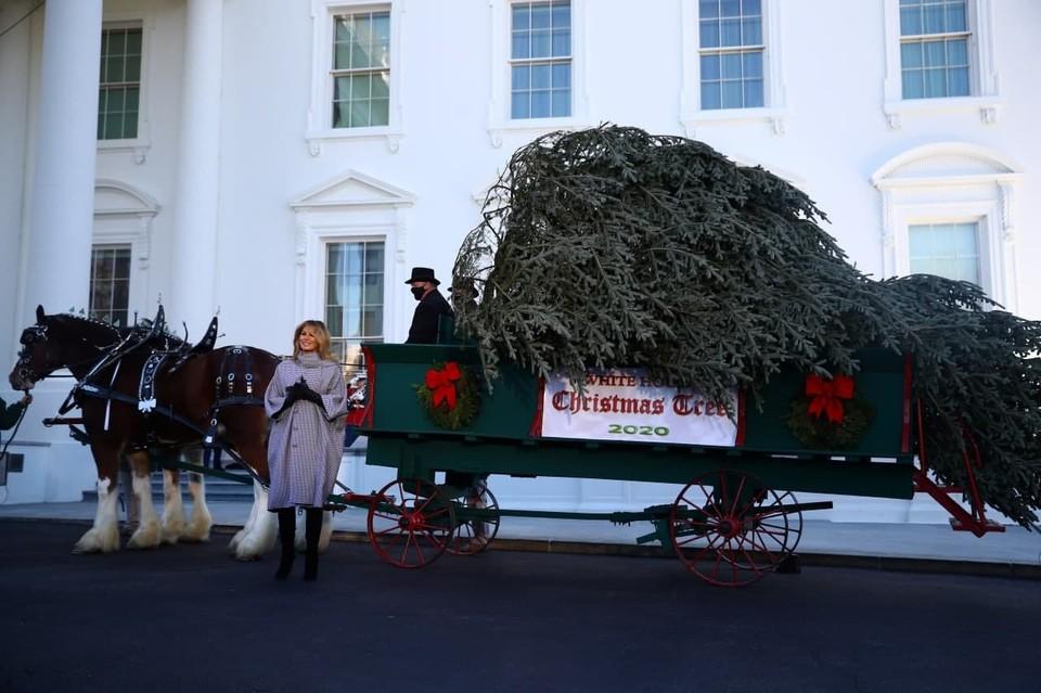 В Белый дом доставили праздничную рождественскую ель