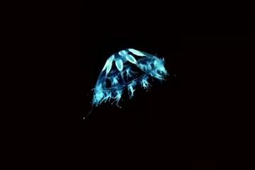 Чудеса природы: обнаружены неизвестные науке существа, похожие на НЛО, и светящиеся в темноте вомбаты