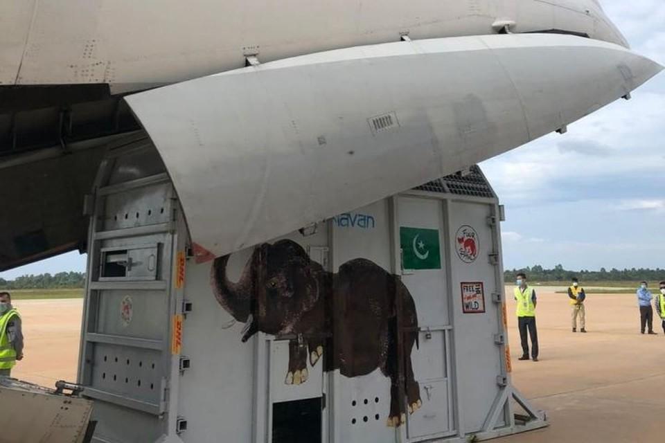 «Подкармливали сахарным тростником»: екатеринбургская авиакомпания рассказала, как помогла певице Шер спасти одинокого слона