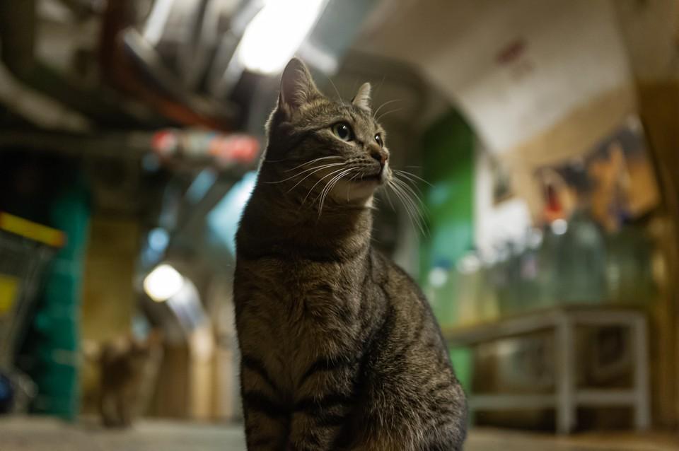 Стало известно, сколько денег получили эрмитажные коты в наследство от мецената из Франции