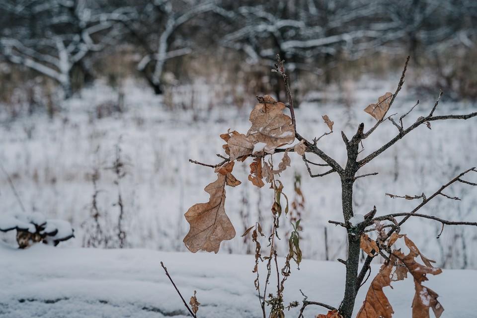 Погода в Орле: на выходных будет морозно и солнечно