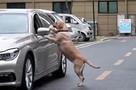 Есть чему поучиться: Сознательный пес проучил человека, мусорившего на улице