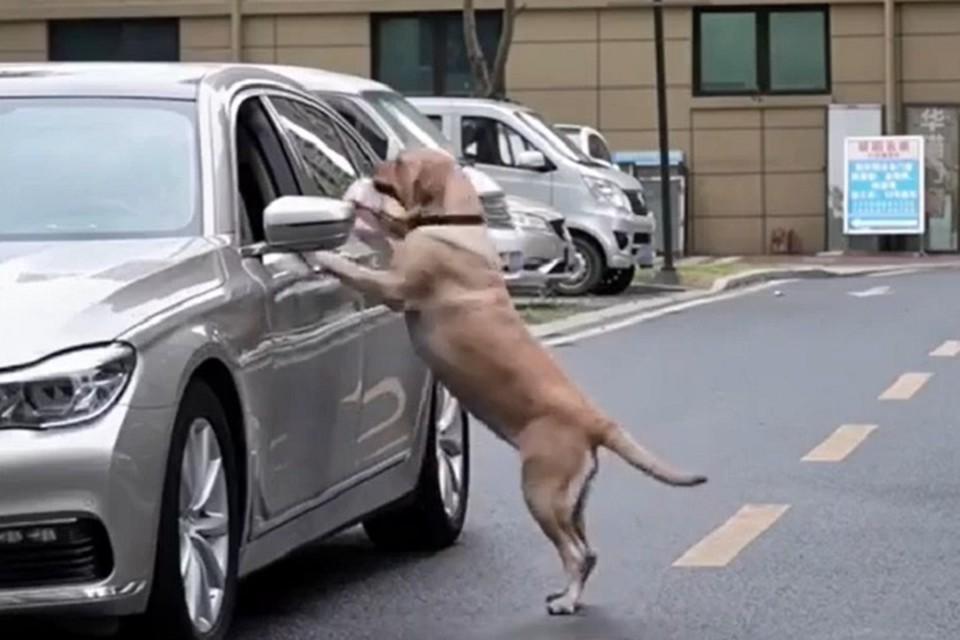 Сознательный пес проучил человека, который мусорил на улице
