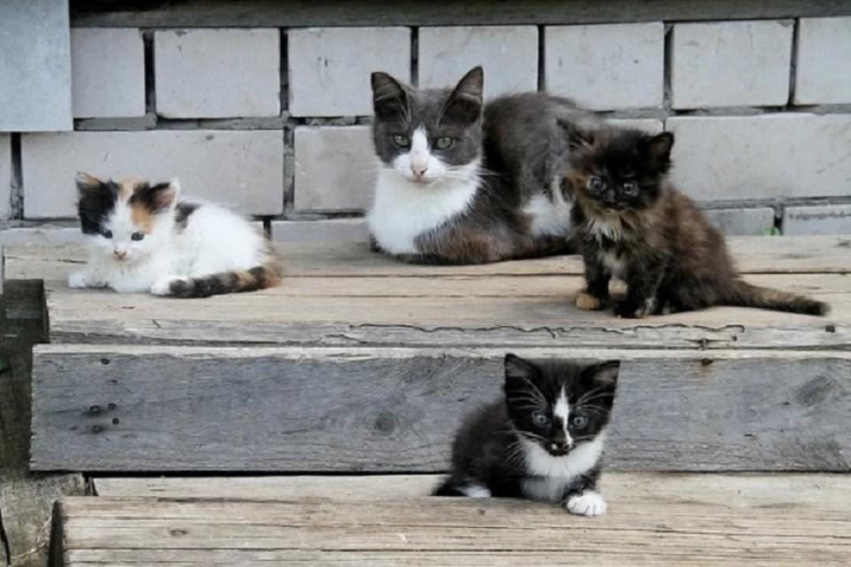 Бездомные кошки ловили мышей и крыс в подвале