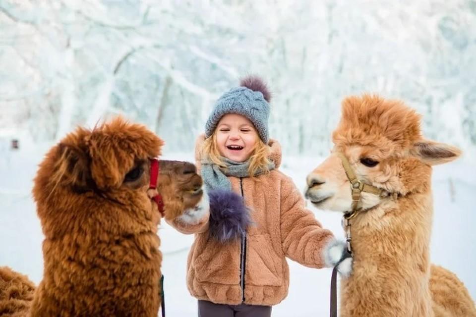 На территории парка живут альпаки и другие животные. Фото: предоставлено организаторами.