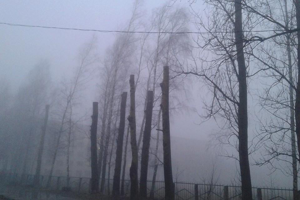 Туман, мокрый снег и плюсовая температура - такие подарки приготовила белорусам на новый год погода.