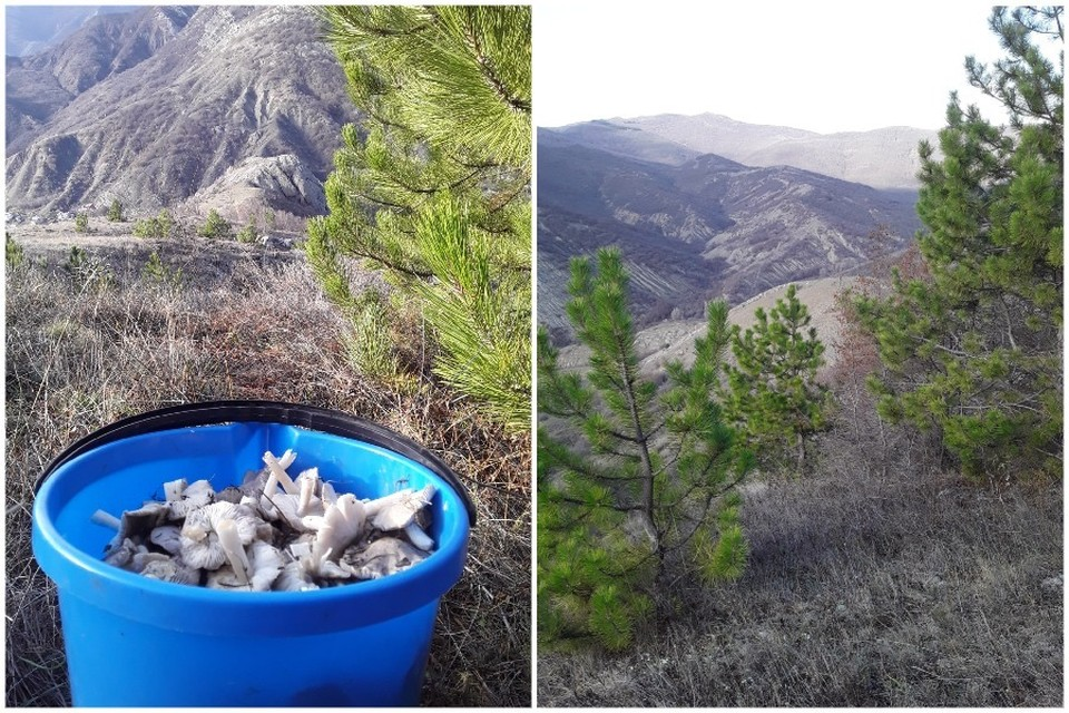 В январе Крым балует свежими грибами. Фото: Наташа Сокол/Подслушано Судак/VK