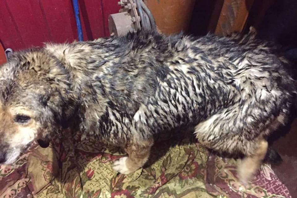 Собака ни на шаг не отходила от спасенного пса.