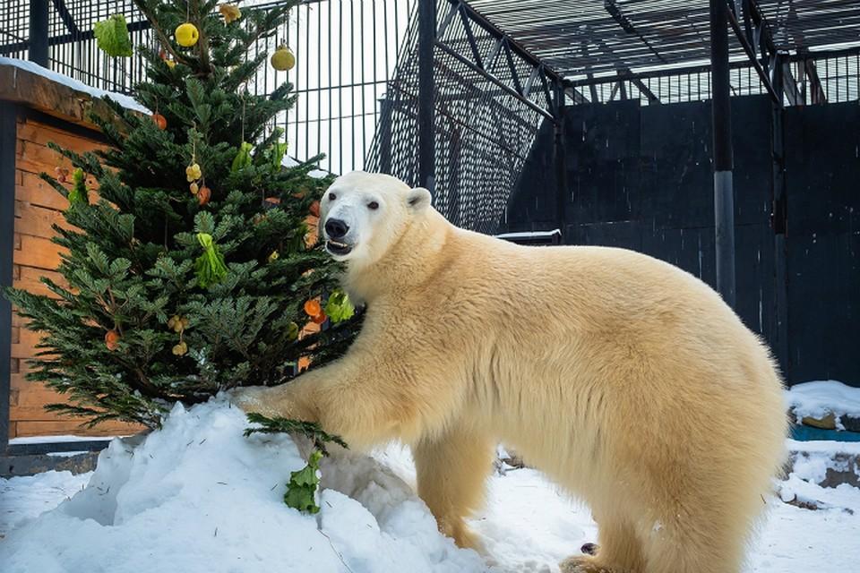 Питомцам «Роева ручья» в Красноярске подарили новогодние елки