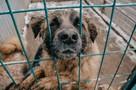«Они умирают, потому что не спят»: как бездомные животные справляются с суровой зимой в приютах и на улицах Самары
